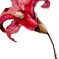 Lily by Nanika Purnawati