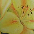 Lily Of The Spring by Oscar Arauz