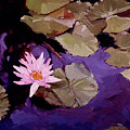 Lily Pad by Betty Jean Billups