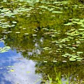 Lily Pad Pond by Robert Skuja