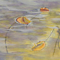 Lily Pads by D T LaVercombe