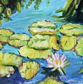 Lily Pads Mo Botanical Garden I by Carol Boss