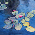 Lily Pads by Nadine Button