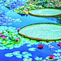 Lily Pond 2 by Dominic Piperata