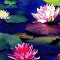 Lily Pond by Amanda Schambon