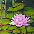 Lily Pond And Pink by Dee House