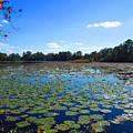Lily Pond by Elyza Rodriguez