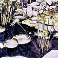 Lily Pond by Susan Maxwell Schmidt