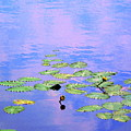 Laying Low Like A Lily Pond  by Sybil Staples