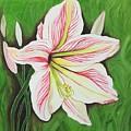 Lily  by Pushpa Sharma