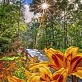 Lily Trail by Debra and Dave Vanderlaan