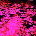 Lilypad 13 2 by Gary Bartoloni