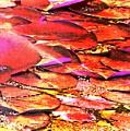 Crimson Lilypads Floating.. by Jolanta Anna Karolska