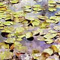 Lilypads W C by Peter J Sucy