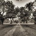 Limerick Plantation Live Oaks by Dustin K Ryan