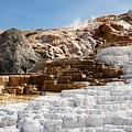 Limestone by Dorothy Binder