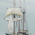 Limited Sails by Wayne Heim