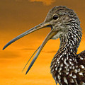 Limpkin At Sunset by Larry Linton