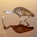 Limpkin In The Mirror by David Lee Thompson