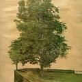 Linden Tree On A Bastion 1494 by Durer Albrecht