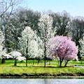Line Of Flowering Trees by Susan Savad