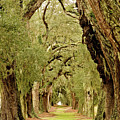 Line Of Oak Trees To Distance by Darryl Brooks