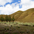 Line Of Trees At Painted Hills by Jean Noren