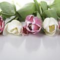 Line Of Tulips by Enrico Crobu