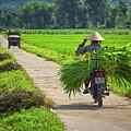 Lingering Around Mai Chau, Vietnam, Southeast Asia by Sam Antonio Photography