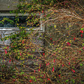 Lingering Blooms In Autumn by James Truett