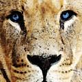 Lion Art - Blue Eyed King by Sharon Cummings