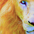 Lion Blue By Nicholas Nixo Efthimiou by Supreme Inc