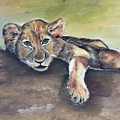 Lion Cub by Betty Bowers