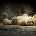 Lion Cub by Linda D Lester