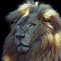 Lion by Deborah Ferrence