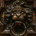 Lion Door Knob by Pati Photography