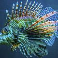 Lion Fish by Craig David Morrison