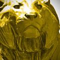 Lion Gold by Jost Houk