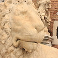 Lion Head In Venice by Michael Henderson