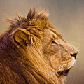 Lion Head by Maria Coulson