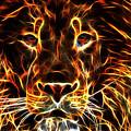 Lion King by Drazen Kirchmayer