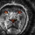 Lion Lady   -3 by Prar Kulasekara