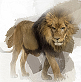 Lion Lion Lion by Maria Astedt