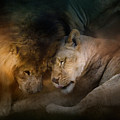 Lion Love by Jai Johnson
