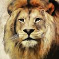Lion Majesty by Athena Mckinzie