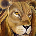 Lion Male by Ansie Boshoff
