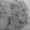 Lion by Nadi Sabirova
