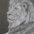 Lion Portrait by Sheila Banga