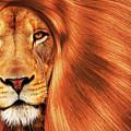 Lion  by Prar Kulasekara