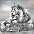 Lion Resting  by Ali Oppy